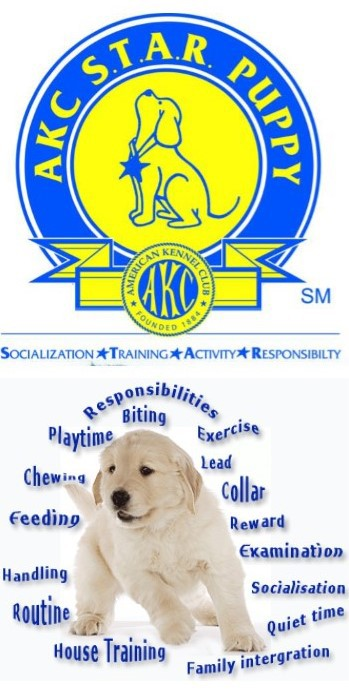 Paws Of Love - Training Services